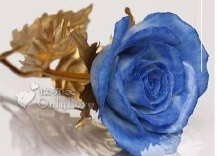 淡雅 花朵 头像 玫瑰