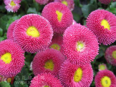 云南加快打造斗南国际花卉产业