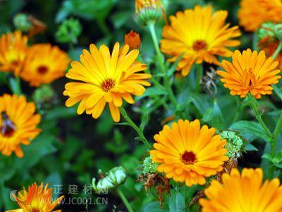 花卉产业成东方农业经济新亮点