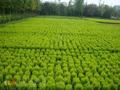 重庆万亩花卉苗木园激活土地里的财富