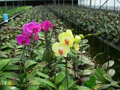 云南:开远市苗木产业越做越大