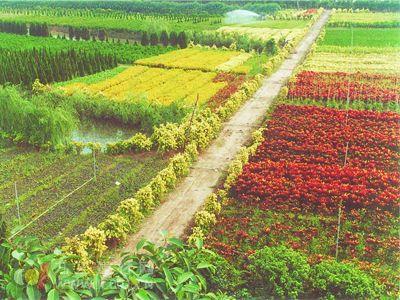 """实现花木产业""""千亿""""目标 市场流通是关键"""