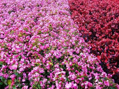 江西发展花卉苗木产业 突破200亿元