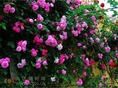 江南花卉苗木大市场 一流规划设计助发展