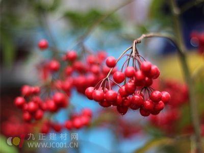 第九届中国泰山苗木花卉交易会开幕