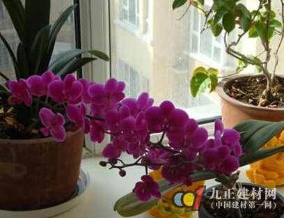 【鲜花摆放风水】 - 鲜花摆放位置风水