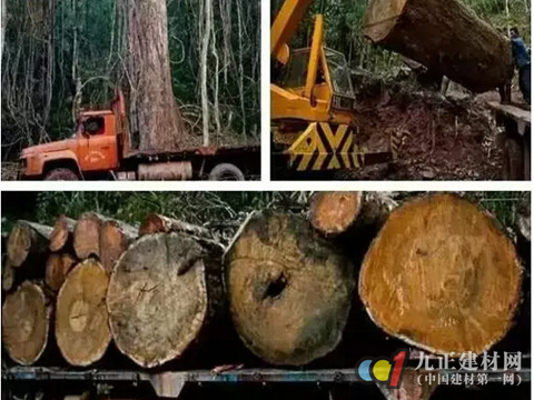 """红木进出口贸易""""封关""""红木制品涨价成定局"""