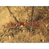 广西陆川县果园滴水毛管|小管出流原材料