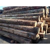 新西兰松木 防腐木 辐射松木 定尺生产