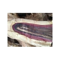 紫檀柳(紫檀榴)