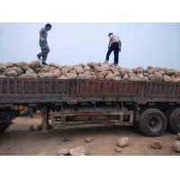 河卵石 天然駁岸石 園林鵝卵石價格