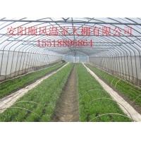 专业建造日光温室技术 蔬菜温室安装和设计
