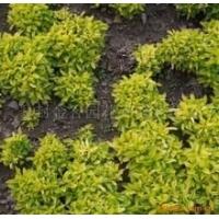 郑州五色草|受欢迎的五色草立体花坛设计哪家提供