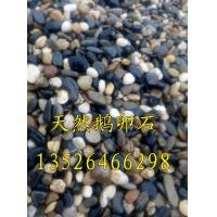 天然鹅卵石 公园铺路用2-3mm,3-5mm纯黑纯白鹅卵石供