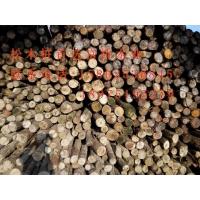 湖南松木桩,湖南打桩松木
