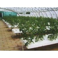 花卉大棚温室建造价格——提供最优质的花卉大棚温室种类