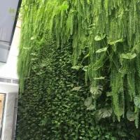 真植物墙的好处——柏霖农业