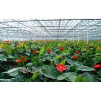 市场上优秀的花卉大棚在哪里可以找到