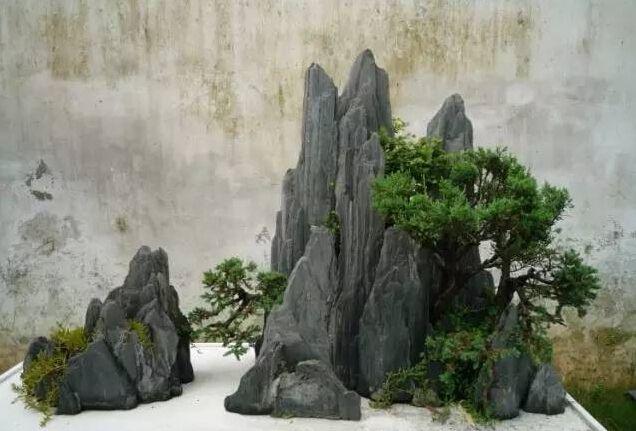 在假山制作前,必须要做到胸有成竹,制作哪一类盆景,哪一种盆景造型,都图片
