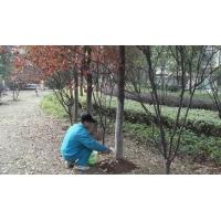 公园绿化养护-001
