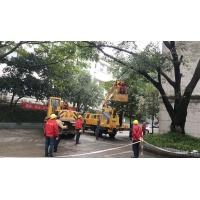 修剪大型树木-01