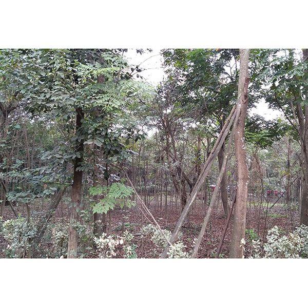 ope手机版园林-苗木