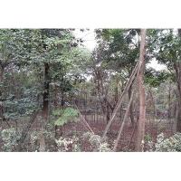 信浴园林-苗木