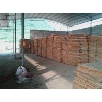 供應桉木單板桉木木皮