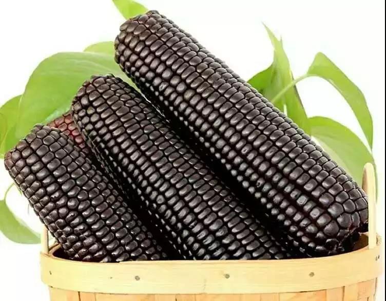 香甜软糯的有机黑玉米