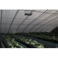 草莓育苗光照灯、生长、着色灯