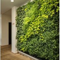 垂直绿化 立体绿化 植物墙