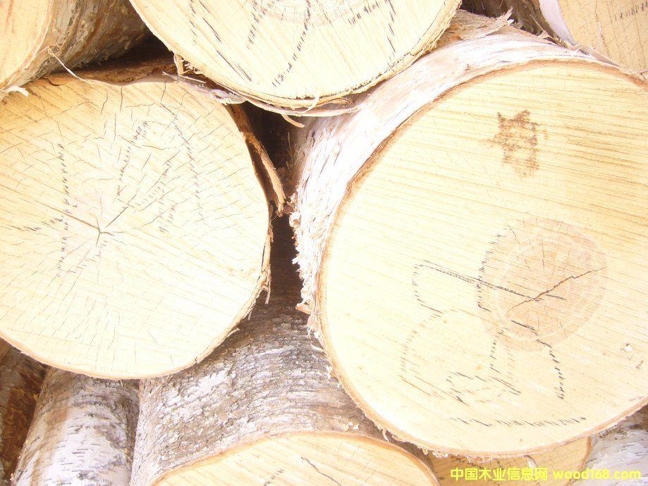 供应梧桐树原木