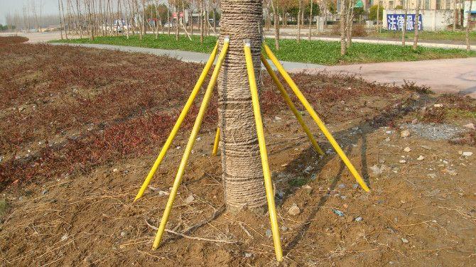 这种苗木支撑杆运用力学和树木学原理,用独特的思维方式,最简单、最经济、最方便诠释树木支撑的真正意义,它的问世将是园林绿化领域一项技术突破。 该支撑杆由两个部分组成,即杆柄和套头。 特性: 1.牢固耐用。由于准确把握支撑点,杆、件、树形成一体,相互作用力与反作用力,增强牢固性,而且不易丢失,还可重复使用。 2.