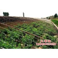 山东省具有口碑的大棚桃树苗生产基地:桃树苗价格