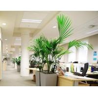 上海办公室绿化租赁公司