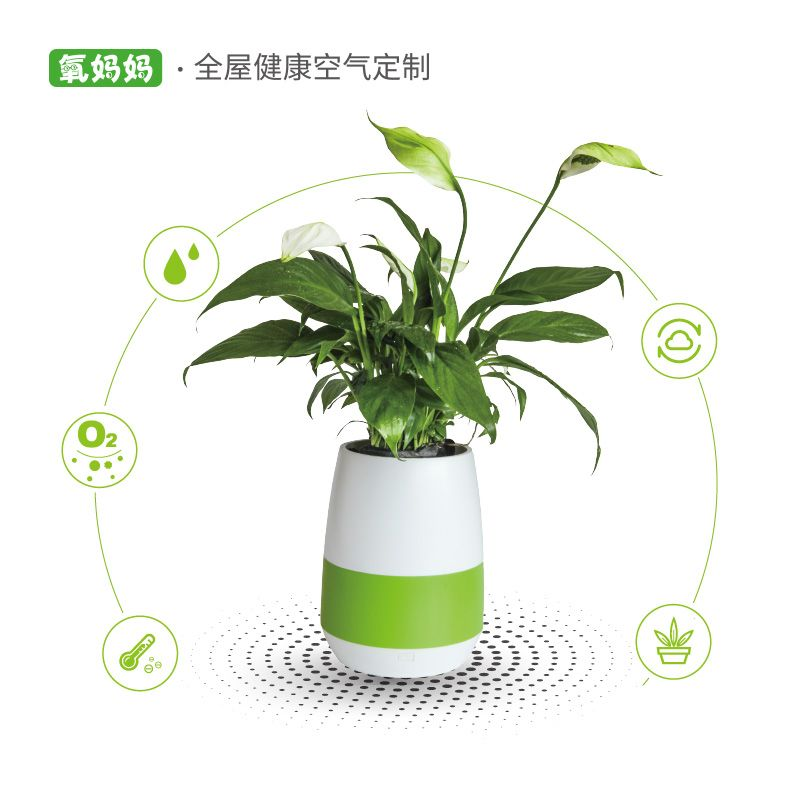氧妈妈美肤e宝3A 小型桌面植物负离子空气净化器加湿制氧创意
