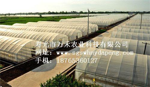 拱棚建造-钢架拱棚建设-寿光市万禾农业