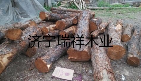 供应香椿木 红椿木