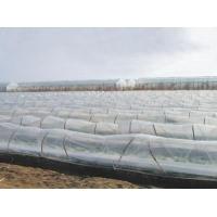 山东省规模最大的葡萄专用膜生产基地 葡萄专用膜厂家