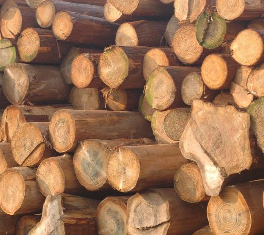 国内国内松木各种规格