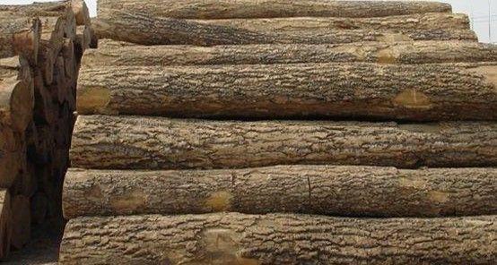 威龙木业供应优质杏木原木