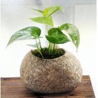 上海银松石膏花盆