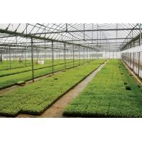 花卉温室顶棚常用PC阳光板【12mm四层阳光板】