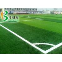 标准11人制足球场草坪
