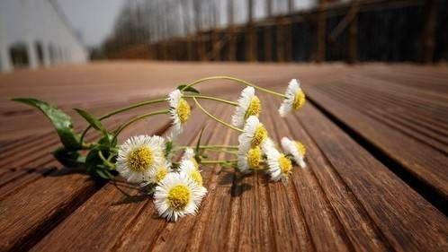 重竹|西安宏艺达高耐户外重竹