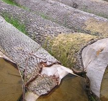 欧洲白橡原木