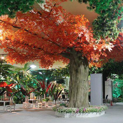 幼儿秋天的枫树简笔画方法
