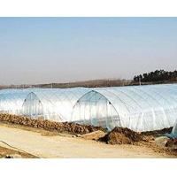 提供专业高级长寿流滴消雾膜——专业生产高保温防老化流滴膜
