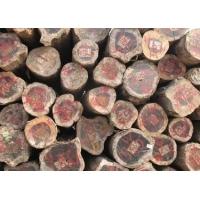 上海正山木材供应非洲铁木豆原木