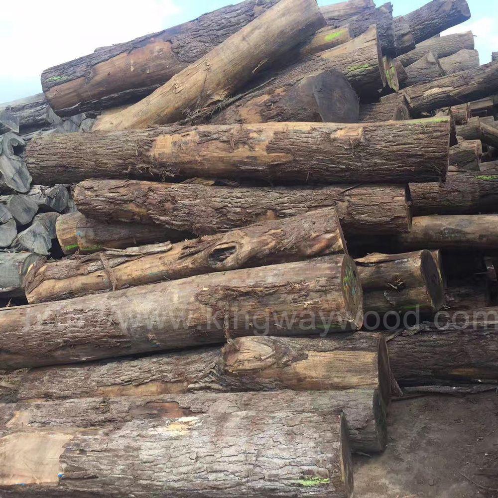 金威木业稳定月出3-5柜美国黑胡桃原木